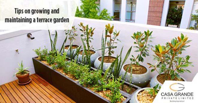 Tips for growing & maintaining a terrace garden