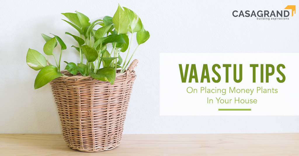Vastu Tips On Placing Money Plants in Your House